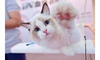 CPF宠物展开拓宠物行业西部市场,2020重庆宠物展10月开幕